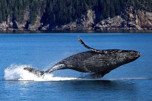 ¿Cuáles son los 10 animales que corren más peligro de extinción?