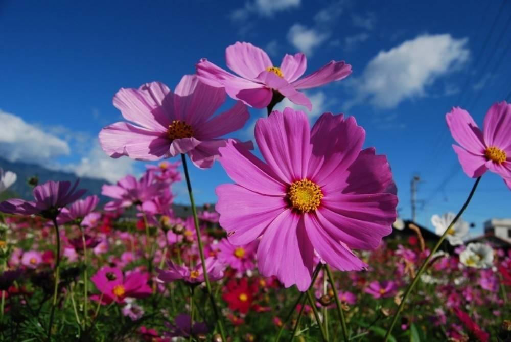 10 flores imprescindibles en todo huerto y jardín
