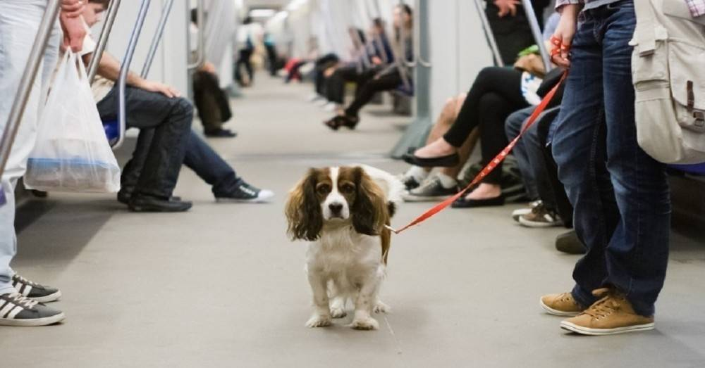 Los animales ya pueden viajar en el metro de Buenos Aires