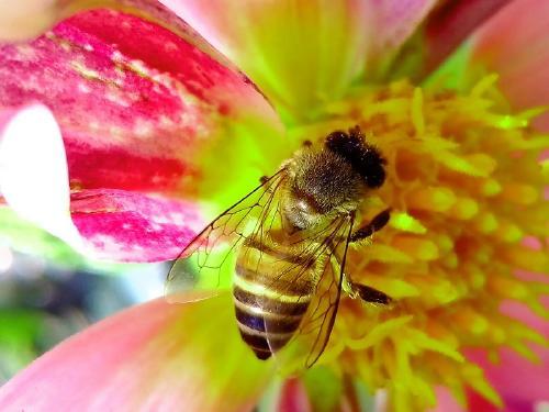 La drástica reducción de insectos puede ser una catástrofe para la humanidad