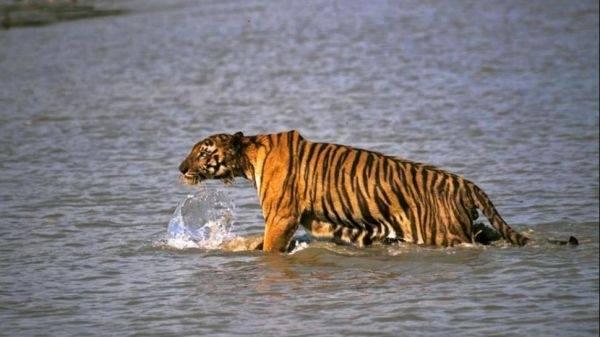 Algunas especies se alejan del riesgo de extinción