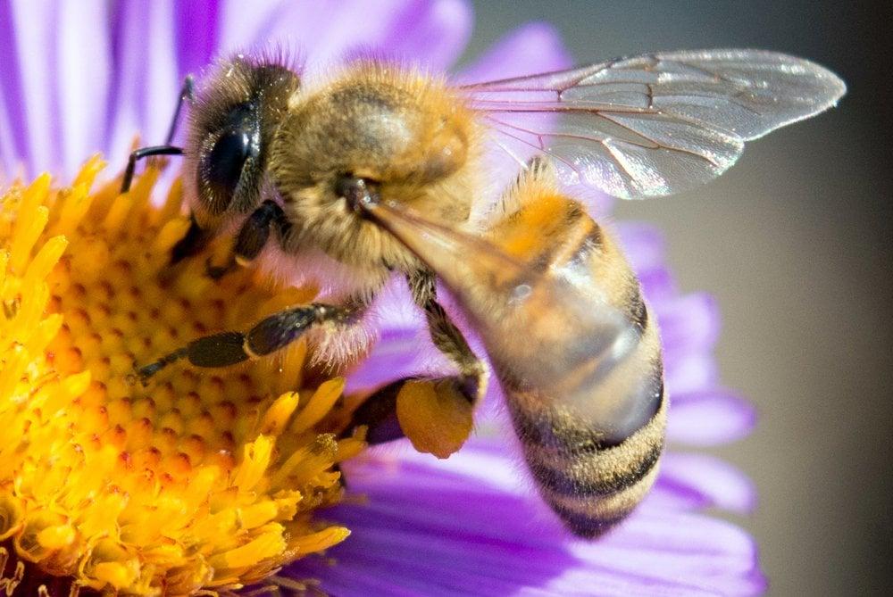 Francia prohíbe  plaguicidas relacionados con la muerte de las abejas