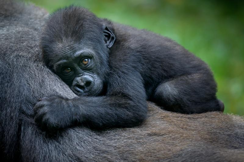 WWF: afirman que la fauna vertebrada se ha reducido un 68% en 50 años