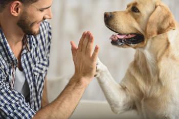 Perro y humano chocando las palmas.