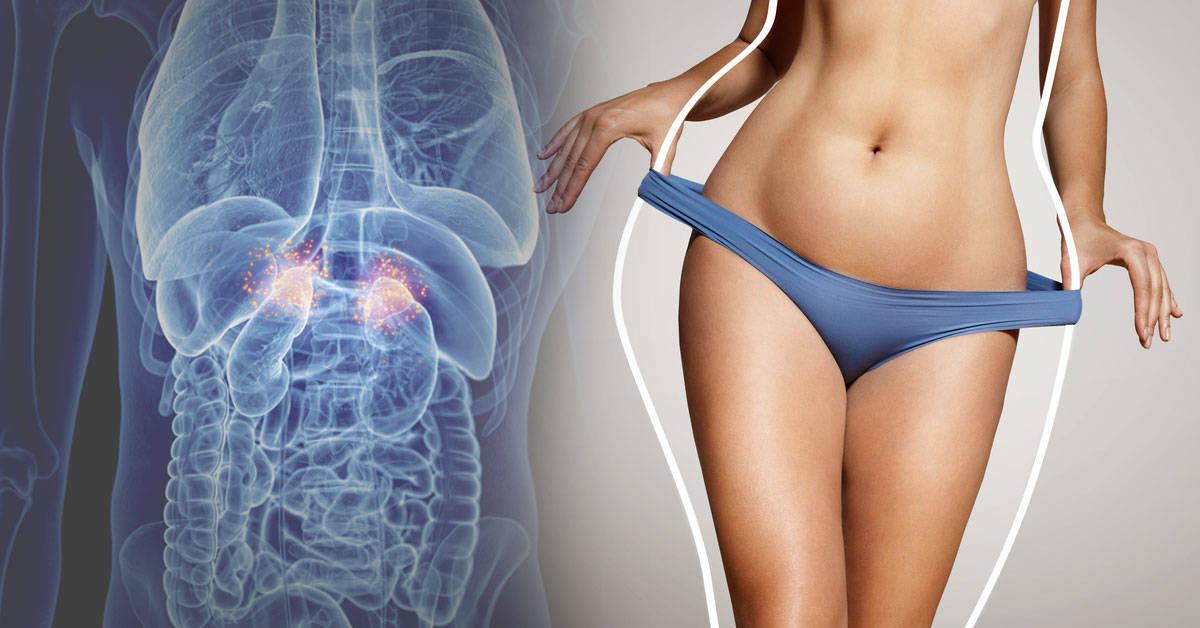 Cuáles son las hormonas que te ayudan a adelgazar y cómo activarlas