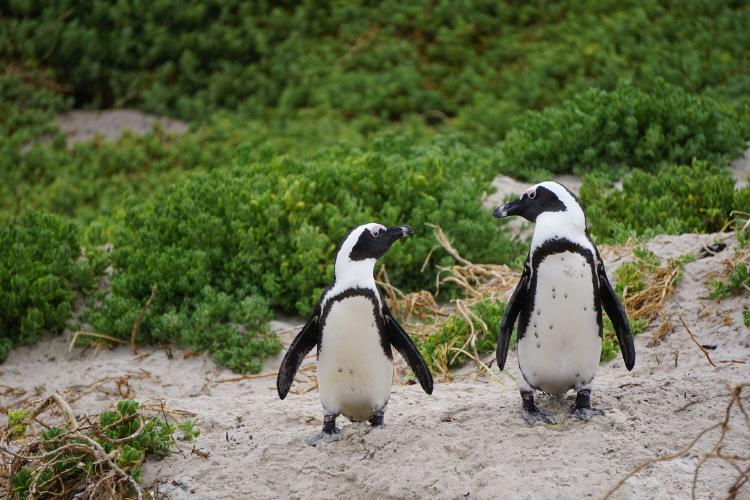 penguins-3994532_1920