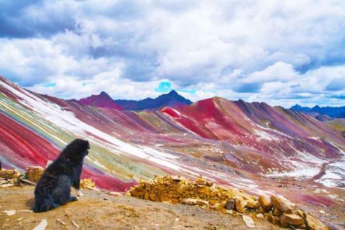 Este perro se ha convertido en el guardián de la Montaña de Siete Colores