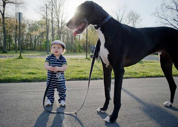 cute-big-dogs-and-babies-291