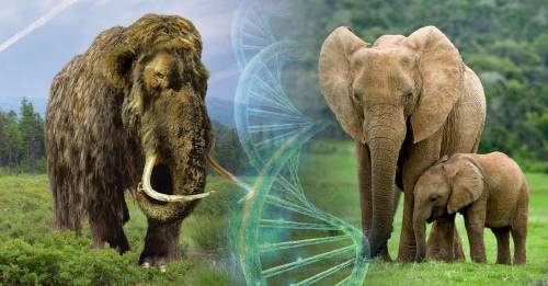 Resucitar especies extintas podría ser posible pero, ¿deberíamos hacerlo?
