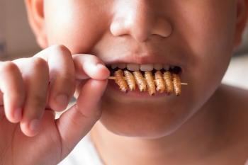insectos comida