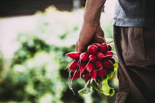 autogestión, agricultura agroecológica