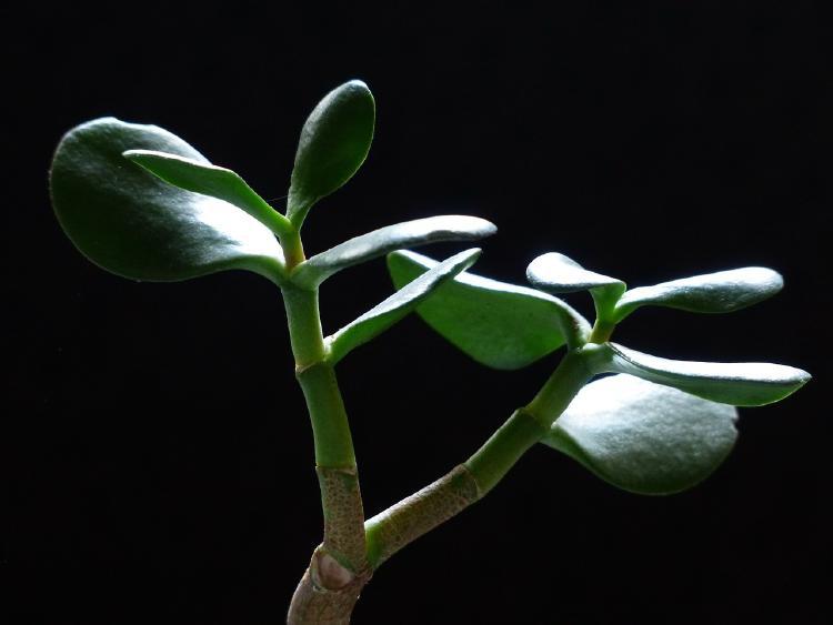 plantas para la oficina