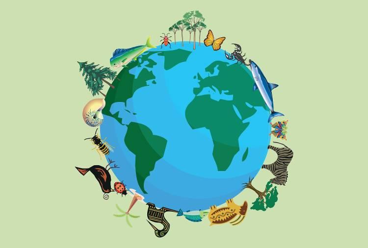 factores que afectan la biodiversidad