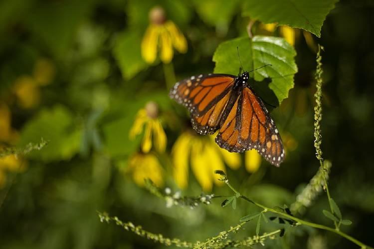 butterfly-4723907_960_720