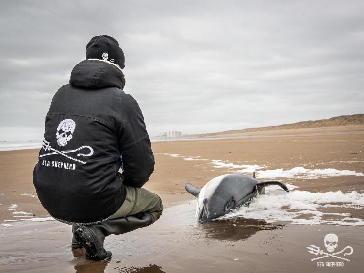 Voluntario de Sea Shepherd con delfñin
