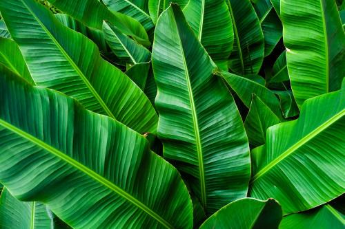 En este destino sirven papas fritas en hojas de plátano para evitar el uso de bo