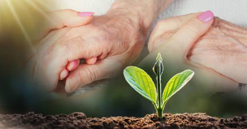 Aprueban ley de composta humana para convertir en abono a los fallecidos