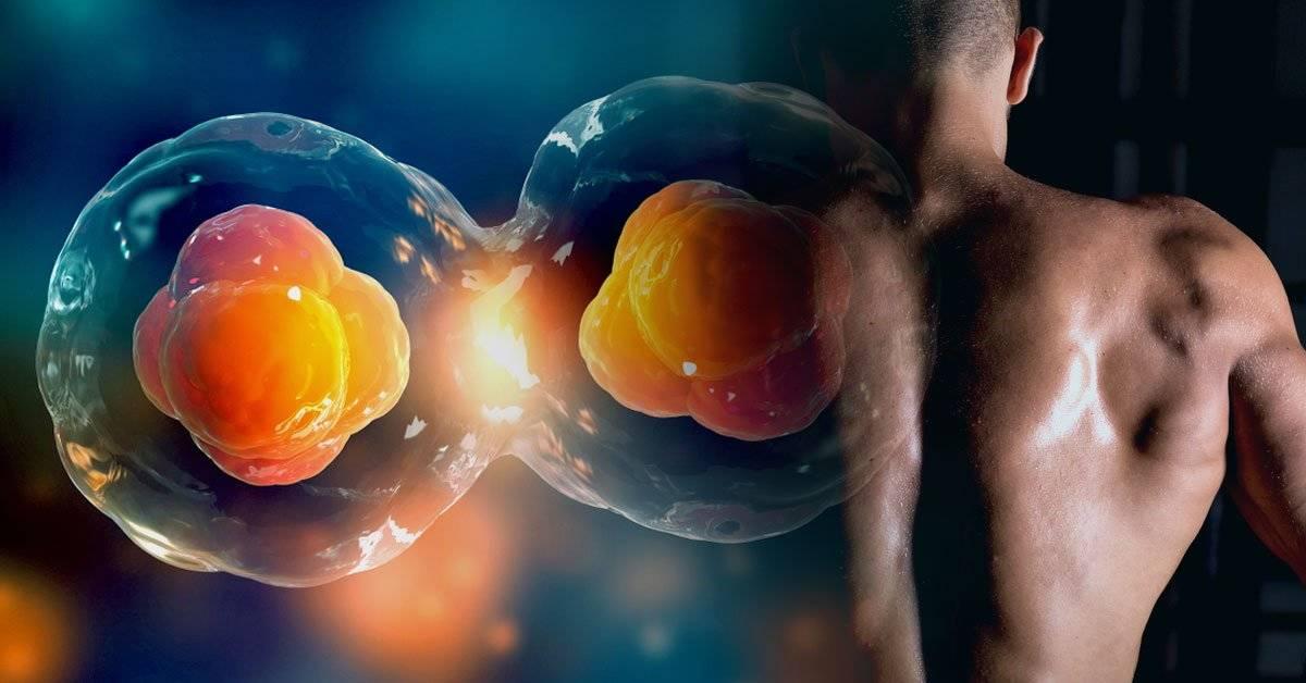 Descubren algo fundamental para el éxito reproductivo de las células