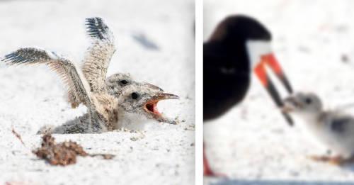 Una imagen desgarradora: un ave alimenta a su cría con una colilla de cigarrillo