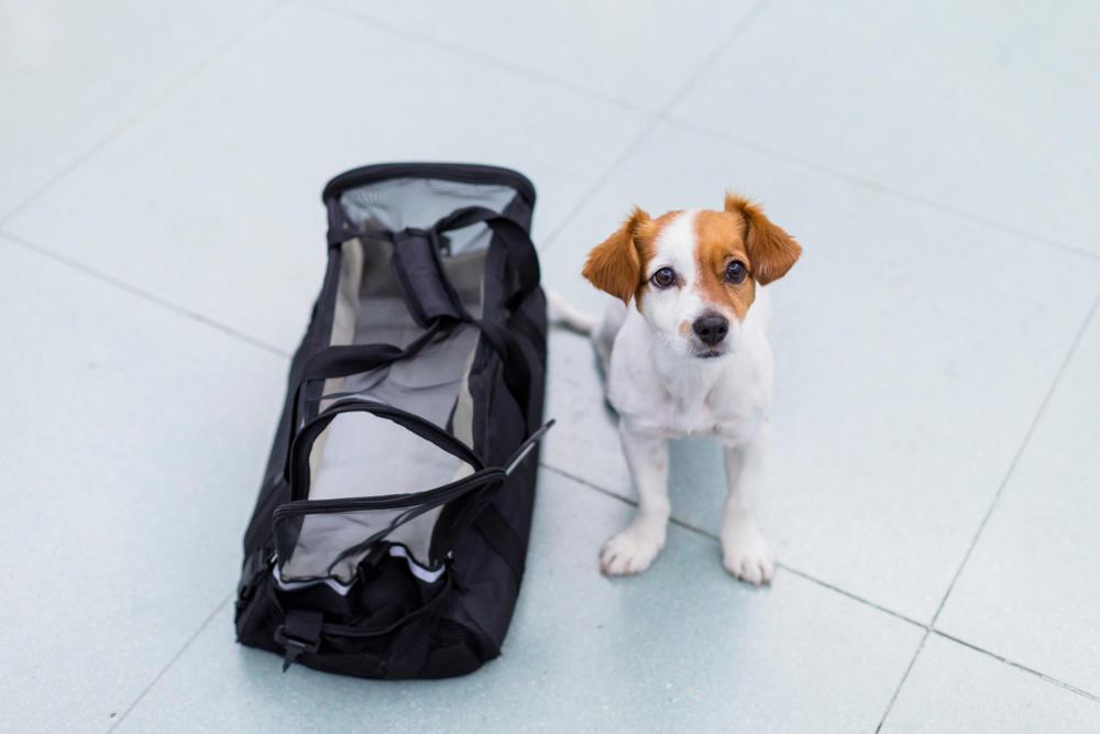 Crean una campaña para poder viajar con sus mascotas en la cabina