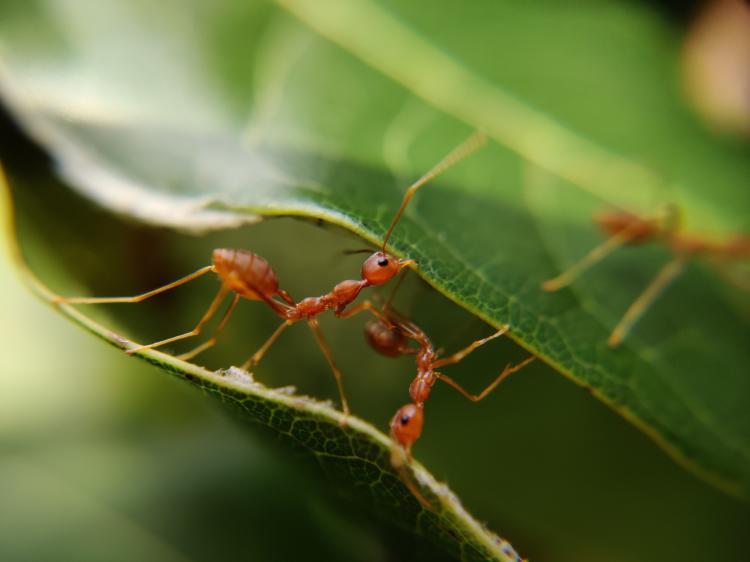 Eliminar hormigas plantas forma natural