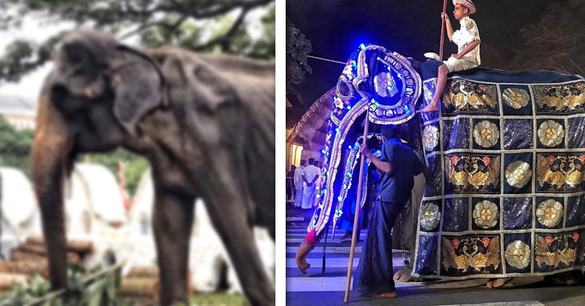 La foto de una elefanta de 70 años que le parte el corazón al mundo
