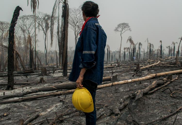 selva quemada