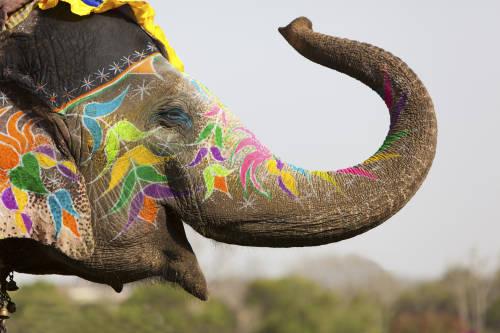 Conoce los animales sagrados según cada cultura