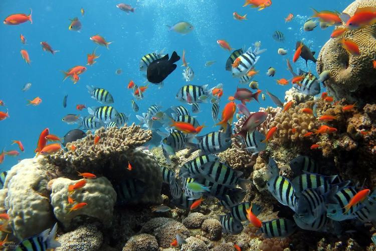 enfermedad en el Caribe está matando corales en tiempo récord
