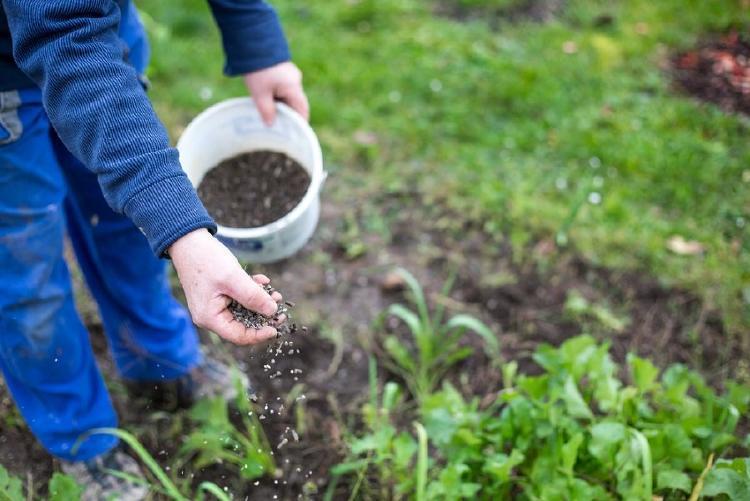 alternativas naturales para sustituir el uso de fertilizantes
