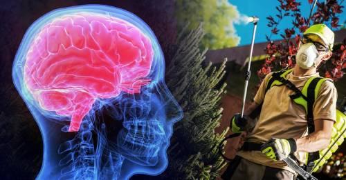 Los insecticidas pueden limitar el crecimiento del cerebro: esto descubrió la ciencia