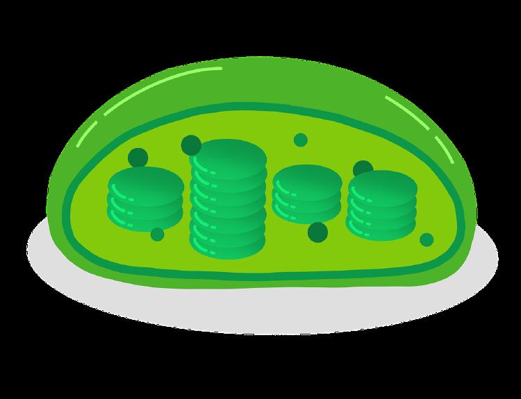 Qué es una célula