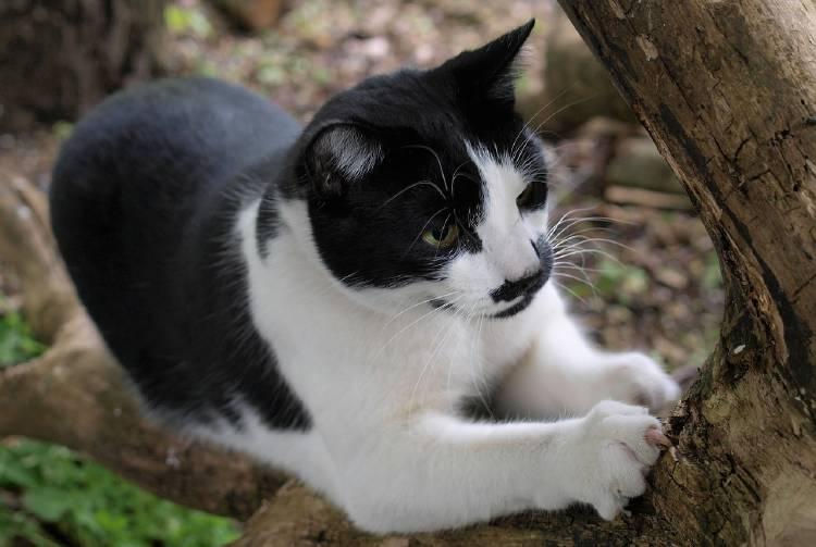 Dale a tu gato un lugar donde arañar