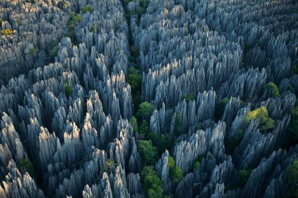 bosque_de_piedra_620x413