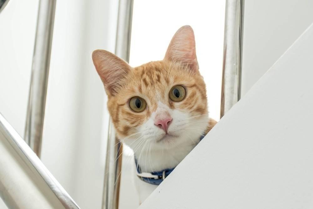 6 estados de ánimo de tu gato y cómo reconocerlos