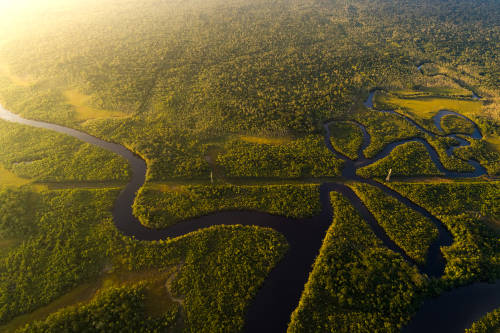 Día de la Amazonia: protejamos la reserva natural más grande del planeta