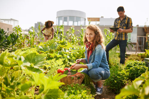 Terrazas verdes, una forma de combatir la contaminación y ahorrar en energía