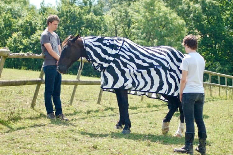 Caballo con vestimenta de cebra con rayas