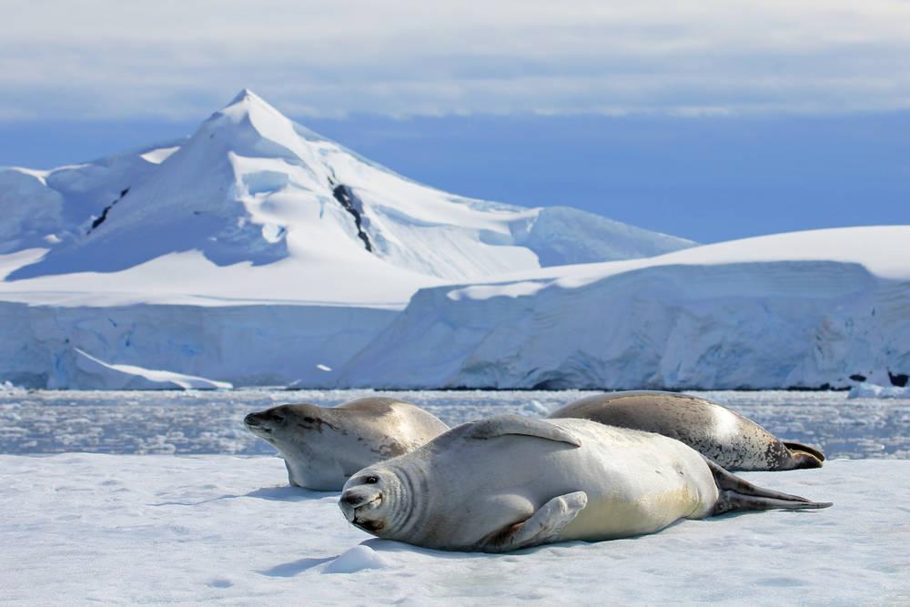 La Antártida experimenta su primera ola de calor jamás registrada