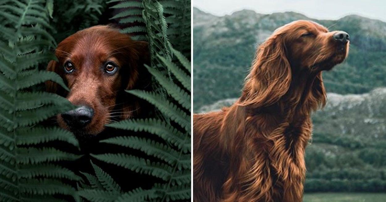 La historia de una mascota que cautiva al mundo con sus increíbles viajes