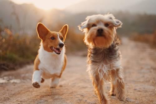 En el Día Internacional del Perro, aprende a ser el mejor dueño