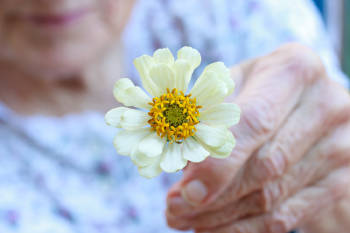 anciana flor