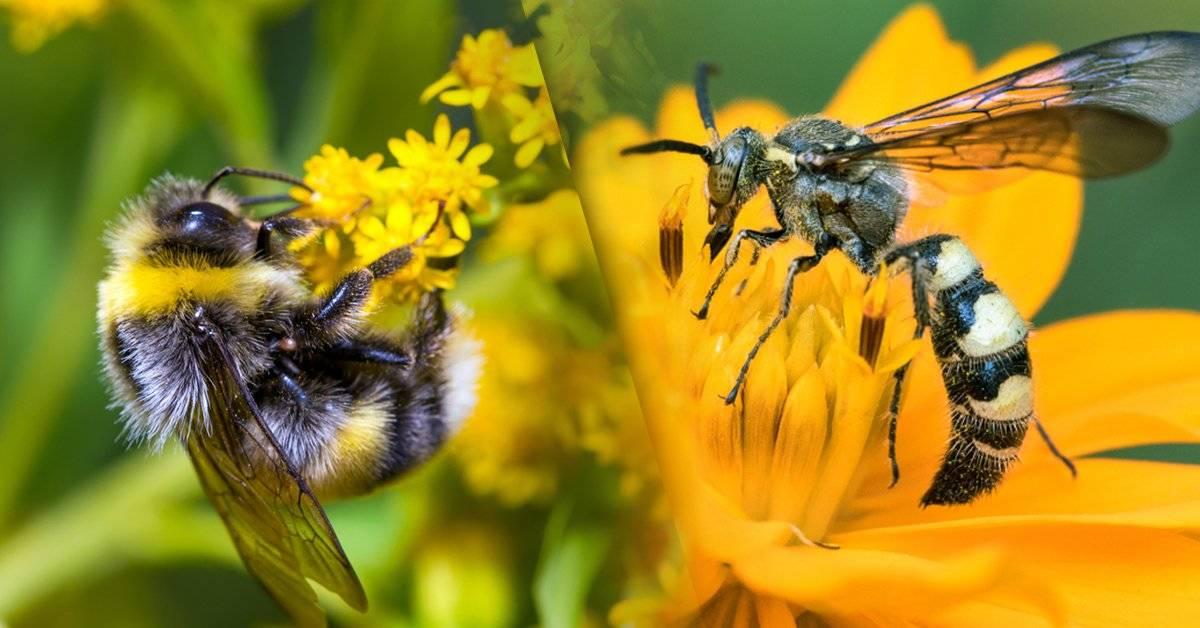 Razones para amar a las avispas tanto como a las abejas