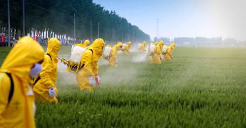 Alemania restringe el uso de pesticidas para detener la extinción de insectos