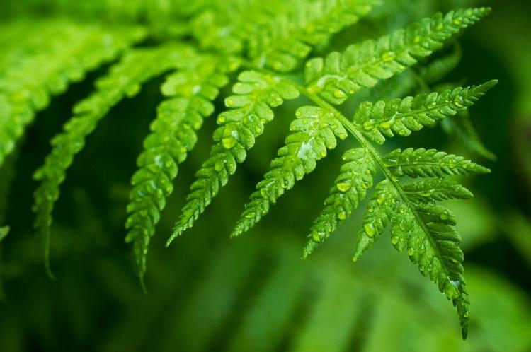 fábula del helecho y el bambú