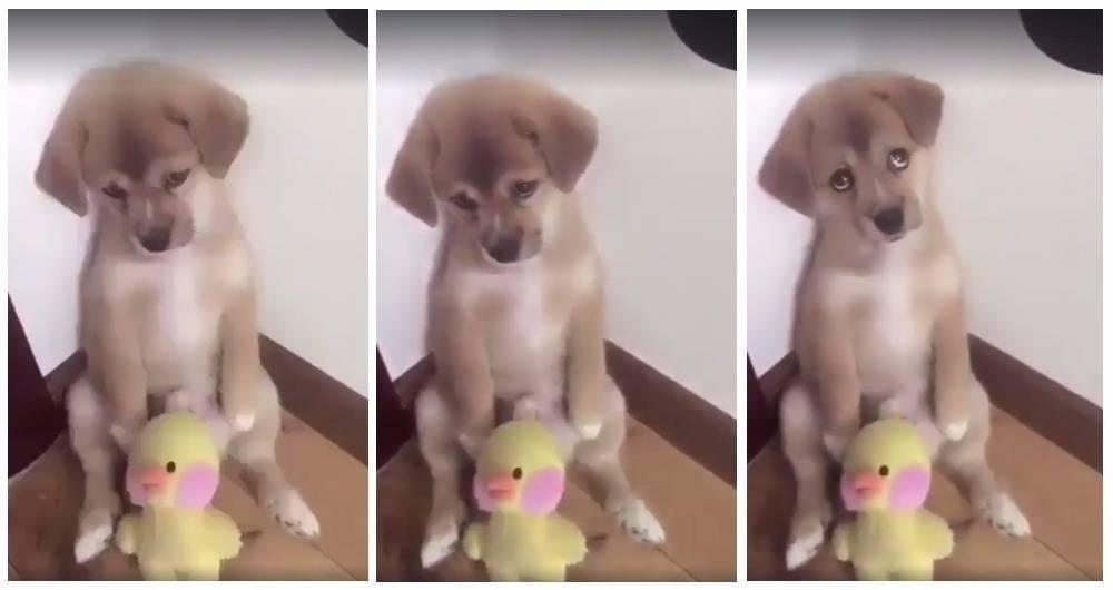 """Te voy a quitar tu pollito"": La adorable reacción de este cachorro te alegra.."