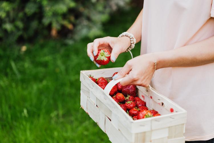 Mujer sosteniendo canasta con fresas frutillas
