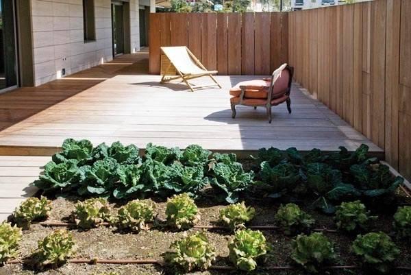 Huerta ecológica en tu jardín