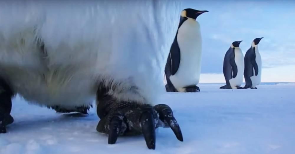 Un científico descuidó el teléfono en la Antártida y dos pingüinos grabar..