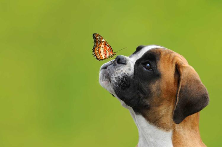 nariz perro 3